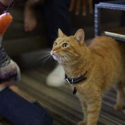 orange-cat-looking-up