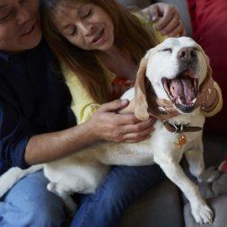 dog-smiling-at-the-camera