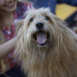 dog-getting-head-scratches