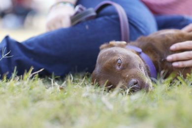 dog-laying-in-the-grass