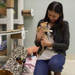 woman-holding-kitten