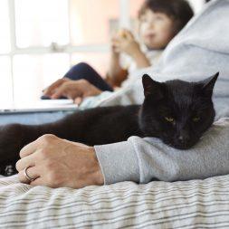 black-cat-resting-on-a-mans-arm