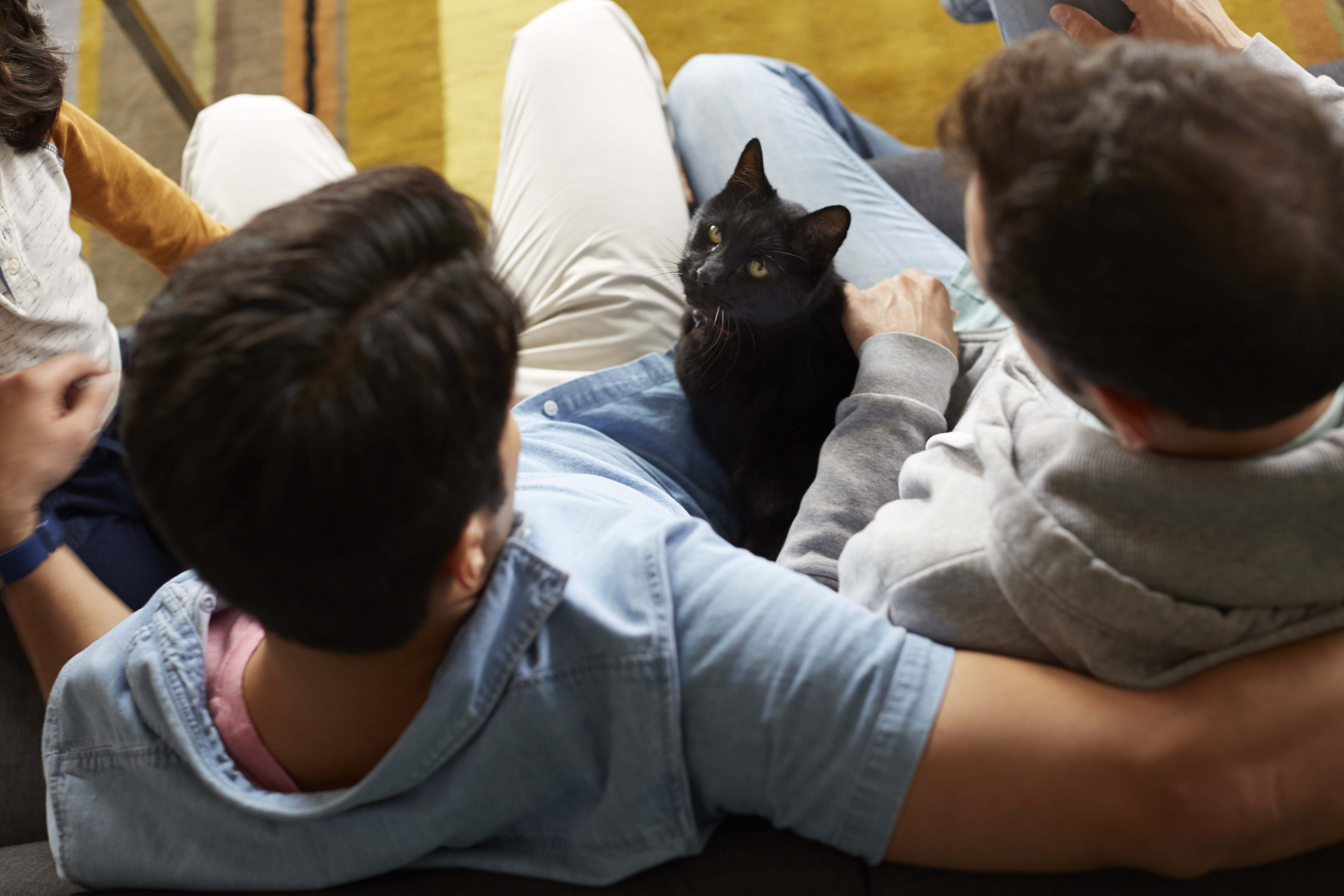 black cat sitting between two people looking at the camera