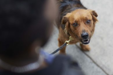 dog-on-sidewalk-looking-at-camera