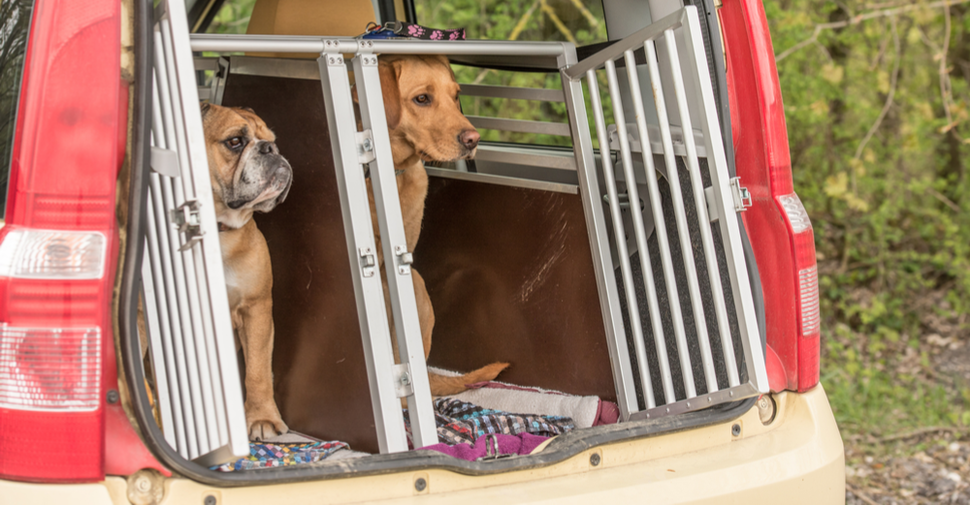 Dogs on a road trip travel in safety inside a dog crate inside a car.