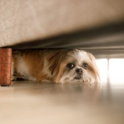 dog-under-a-couch