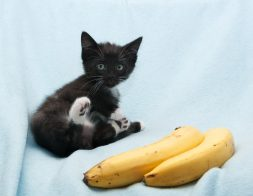 Black Kitten And Bananas.