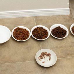 Cat Food Variety