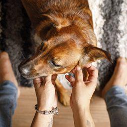 woman petting a brown dog