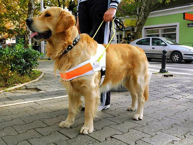 service dog with owner