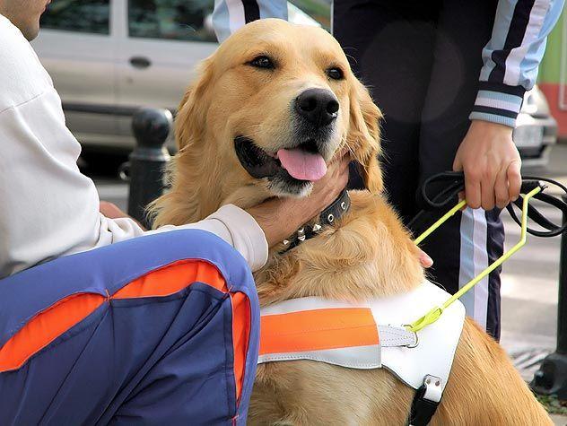 person petting service dog