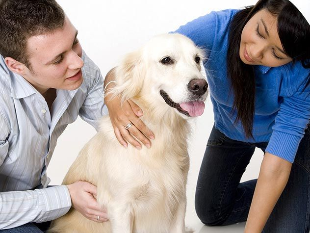 therapy dog with man and woman