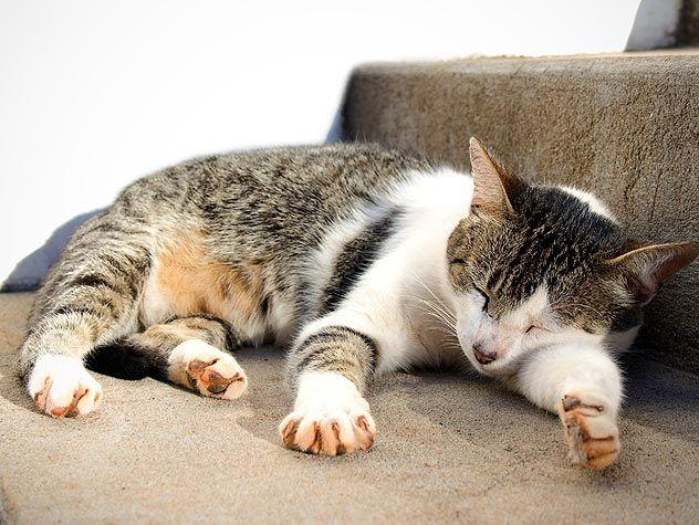 cat sleeping on stairs