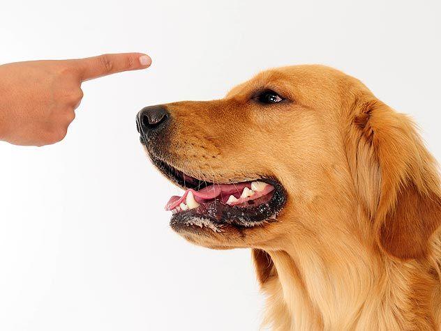 finger pointing at dog