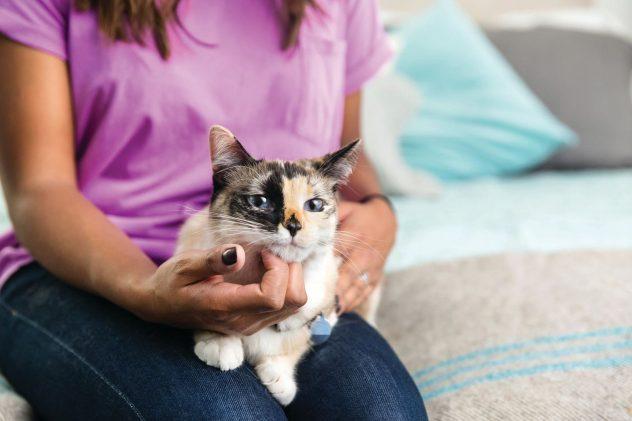 cat sitting on girls lap