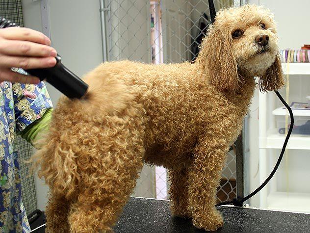 dog at a groomer