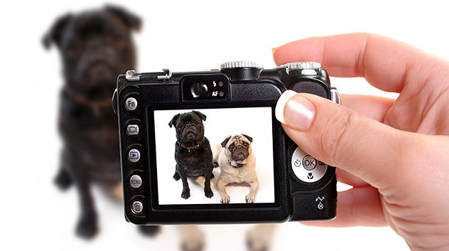 camera taking a picture of dogs