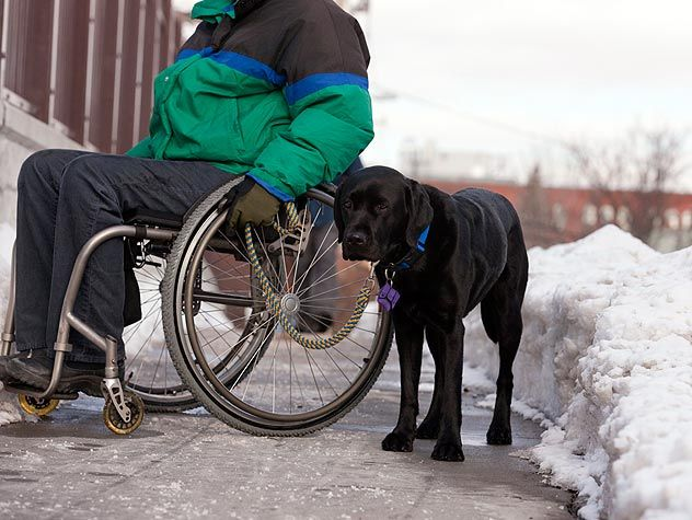 dog standing next to person in wheelchair